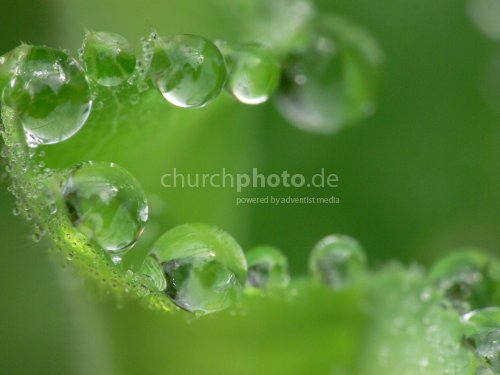 Heilpflanze, medicinal plant