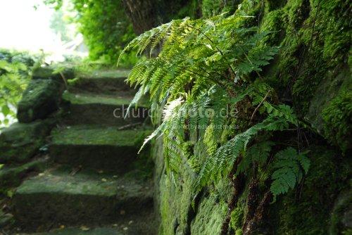 Farn vor der Treppe
