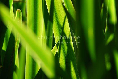 Grüner Zauber