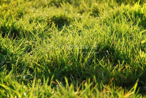 Grüne Zone