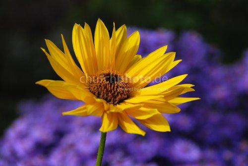 Gelb fällt immer auf welcome