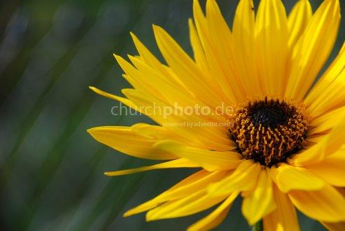 Gelb fällt immer auf