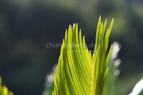 Feines Grün im Licht