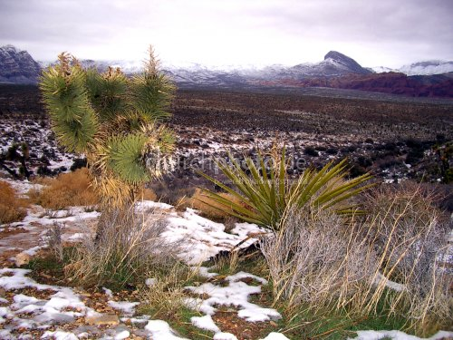 Snow in Red Rock Canyon