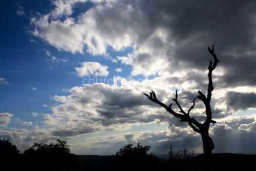 Knorriger Baum vor dramatischem Himmel