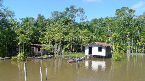 Living at the Amazon river