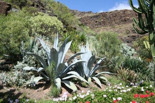 Frühling in den Bergen auf Gran Canaria