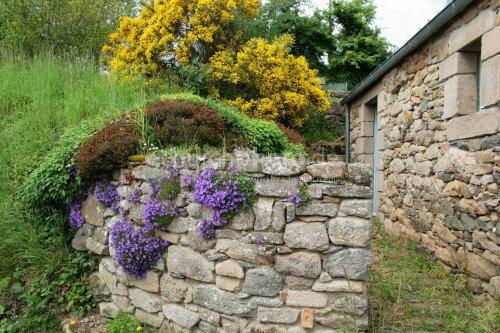 Blühende Steinmauer