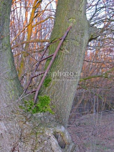 Leiter im Baum