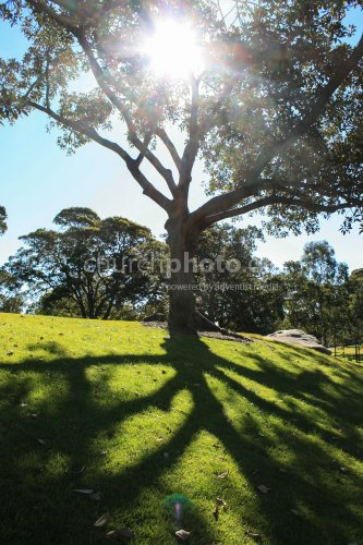 Tree's shadow