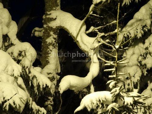 Verschneite Baumäste  -  snow tree branches