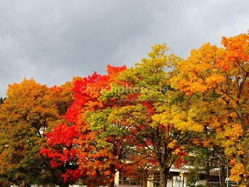 Bäume im Herbst  -  trees in autumn