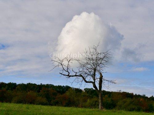 Baum mit