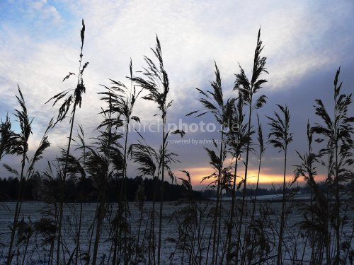 Herbage in winter
