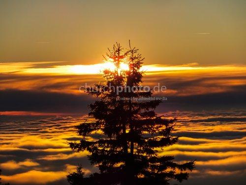 Bäume in den Wolken