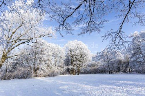 Winterlicher Park