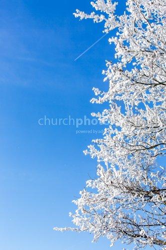 Raubereifter Baum