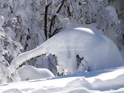 Spezielle Baum im tiefem Schnee  - special tree in deep snow
