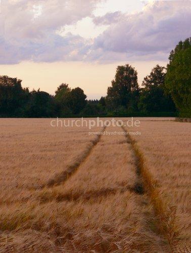 Spur im Getreidefeld