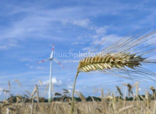 Windrad u. Getreide