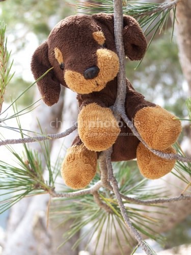 Malli im Baum