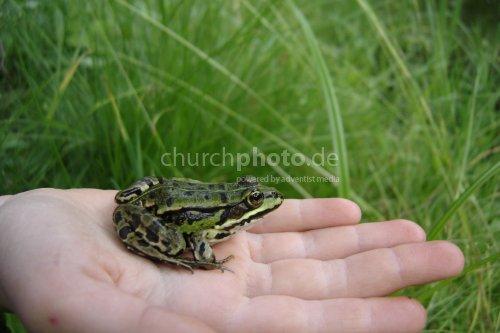 Frosch auf Hand