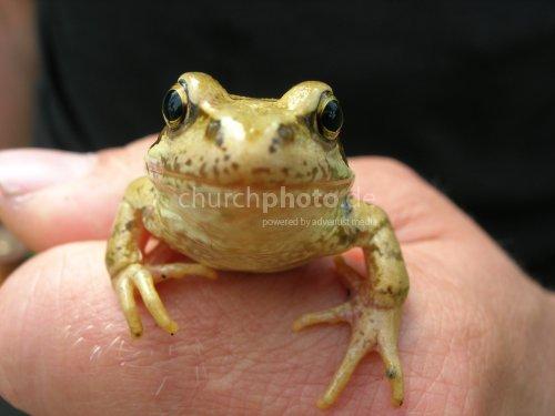 Mein Name ist Frosch