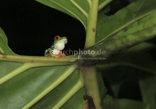 Lockruf im Regenwald