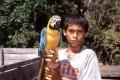 Boy with parakeet