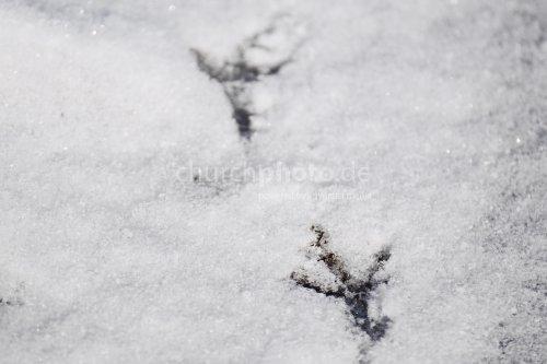 Vogelspur