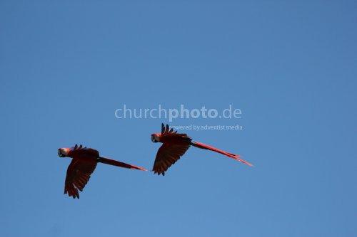 Paarfliegen