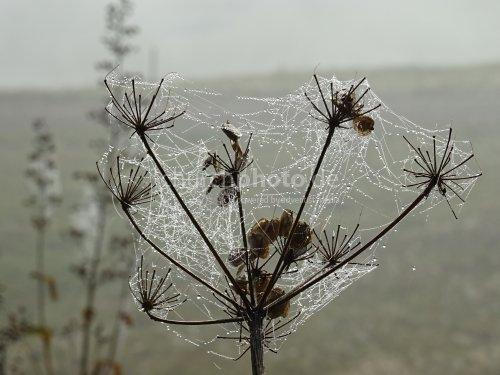 Spinngewebe  -  spider web
