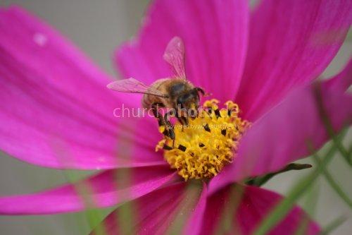 ,,Lecker Blütennektar