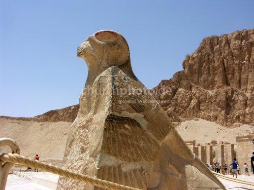 Horusfalke