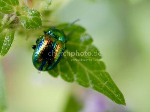 Käfer in Regenbogenfarben