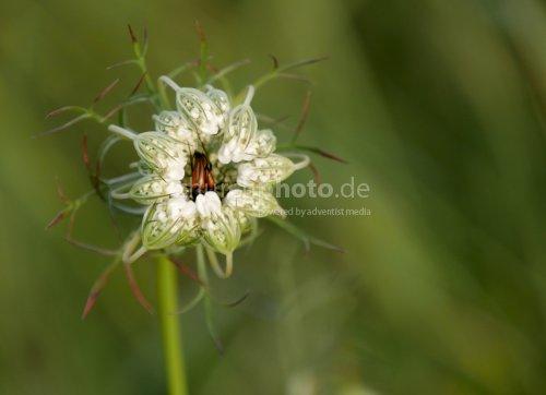 Verliebte Käfer