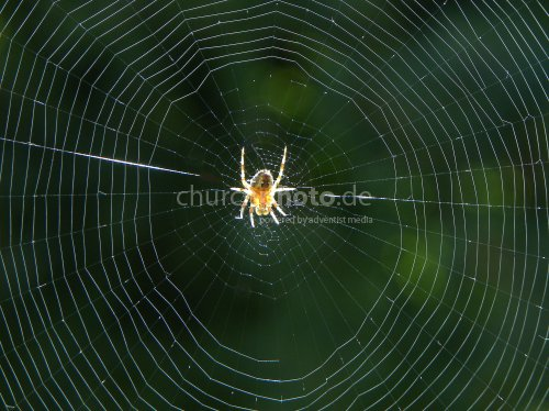 Spider in the net, Spinne im Netz