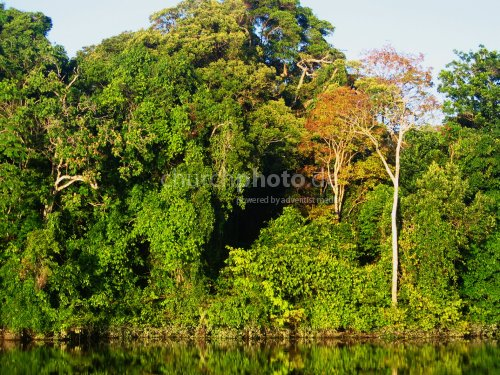 Rio Negro and rain forest