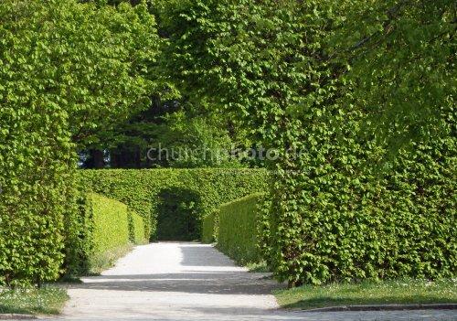 Grüner Durchgang in der Eremitage in Bayreuth