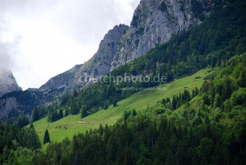 Wald und Fels
