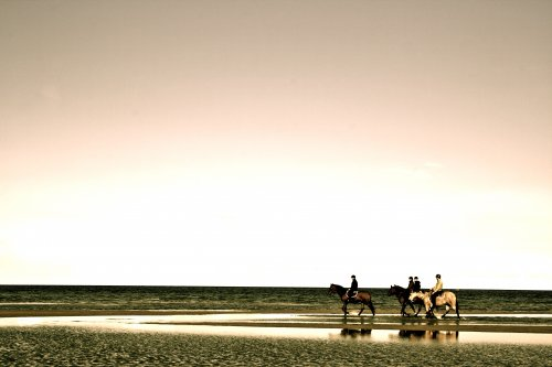 Ausflug mit Pferd