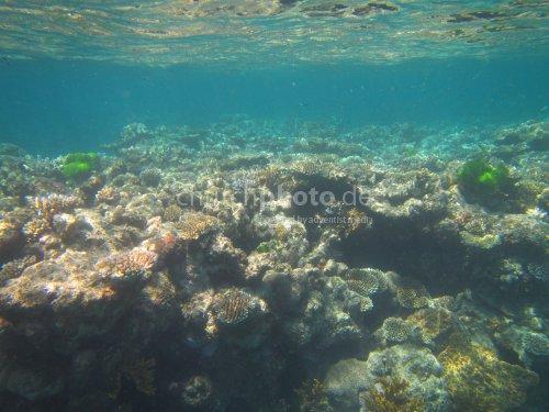 Eintauchen: Great Barrier Reef