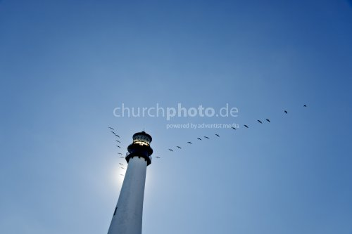 Lighthouse Cape Florida - Birds