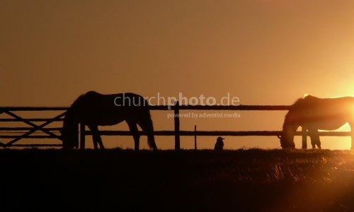 Pferde-horse