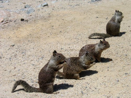 Feeding Squirrels