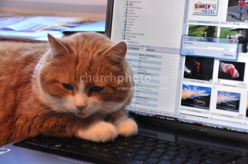 How do you spell CAT?