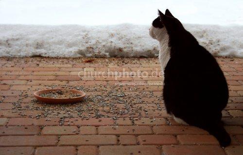 Fütterungszeit
