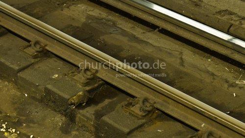 Rat at the tracks