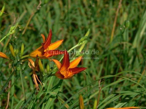 Blume - unbekannt