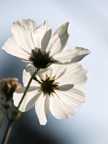 flower in backlight